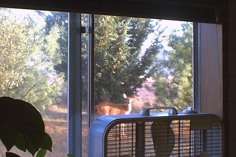 morning_deer.JPG