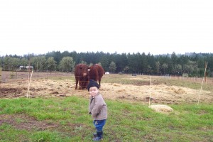 Dalton checking the steers