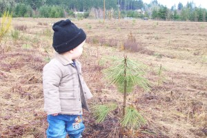Dalton checks the trees